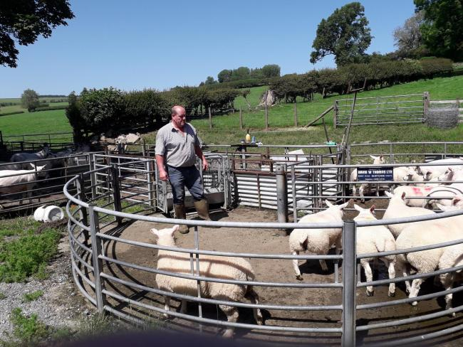 H C Roberts of Orseddwen Farm, Montgomeryshire, is one of the farmers taking part in the Stoc+ flock and herd health project