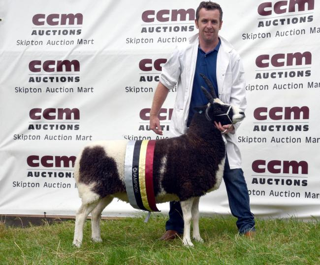 Wyn Harries with his CCM Skipton Jacob supreme champion aged ewe. PICTURE: Adrian Legge Photography