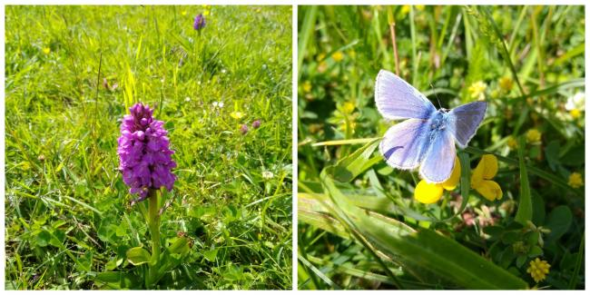 Orchids and blue butterflies abound in the Skrinkle Haven meadow.