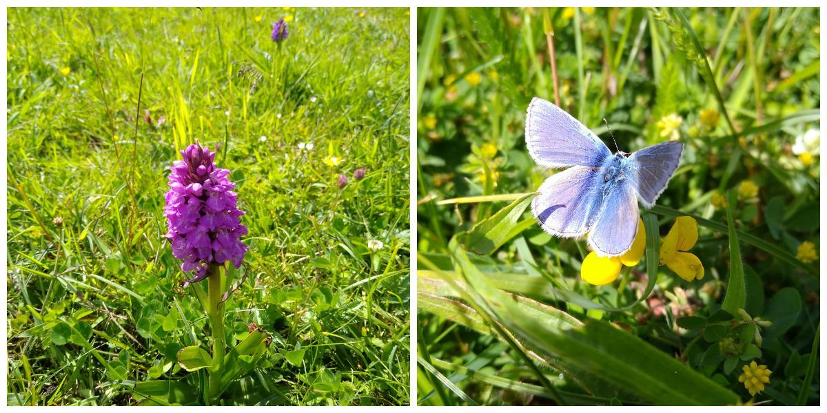 Skrinkle Haven wildflower seed will help create new meadows