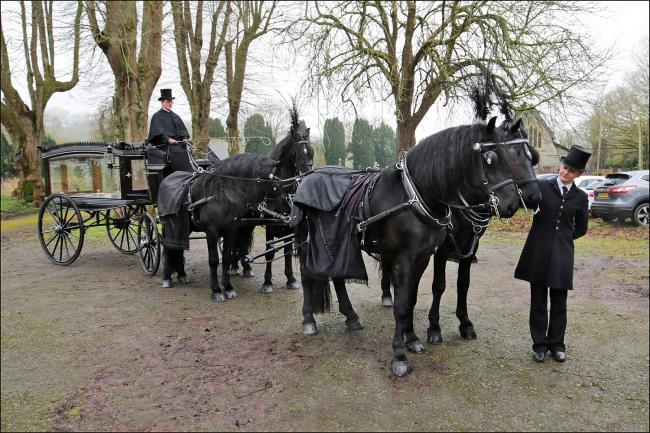 The team of horses and horse-drawn hearse at St Tyfriog Church, Llandyfriog. PICTURE: Barry Adams