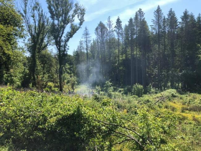 An area of woodland caught fire