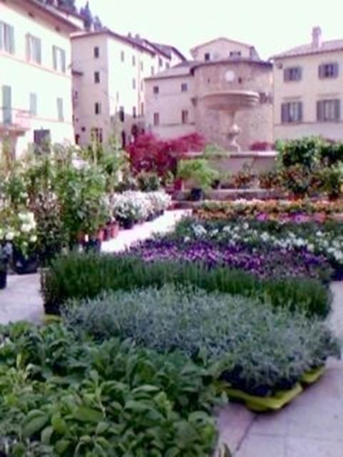 Cetona in bloom