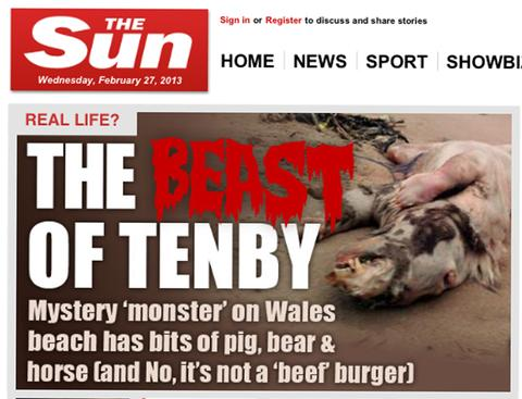 How the Sun's website followed up our postings on the mystery Tenby beast