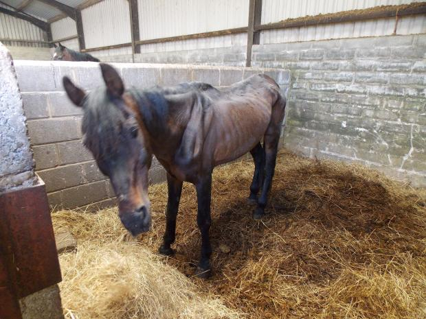 Western Telegraph: The horrific state of one of the horses owned by Lindsey Morgan