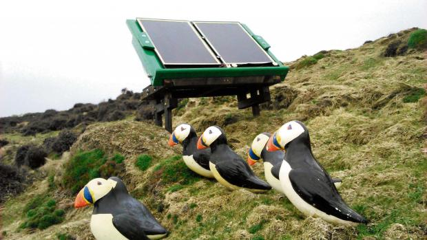Western Telegraph: PUFFIN CALL: The solar-powered sound system and decoy puffins on Ramsey IslandPICTURE: Greg Morgan