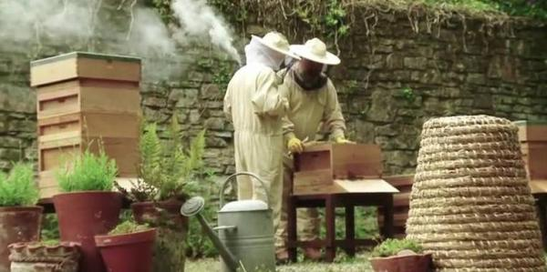 Western Telegraph: Beehive inspection demonstrations will be just one of the activities taking place at Scolton Manor's open day on Saturday.