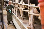 The NFU says support for Welsh dairy farmers from public, processors and retailers is vital after farmgate milk prices have fallen by around 25% in recent months. (11393947)
