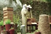 Come for a taster beekeeping session at the Pembrokeshire Beekeeping Centre at Scolton Manor on May 17 or 31. PICTURE: (S)    (24019832)