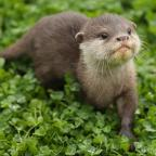 Western Telegraph: Countryfile sparks debate with segment on otters