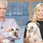 Western Telegraph: Holly Willoughby took her adorable cats on This Morning and the response was purr-fect