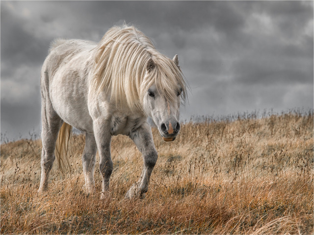 Tenby Camera Club member Jan Sullivan's Preseli Mountain Pony was judged the best digital image in the eight-way club battle.
