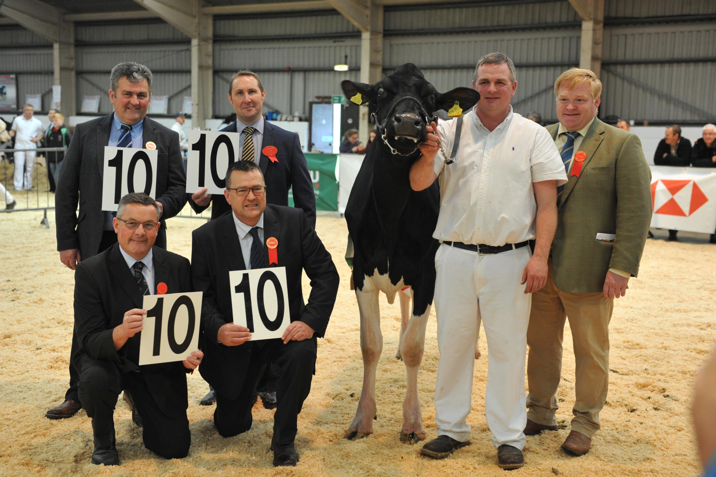 It was a perfect 10 from all four judges of the champion heifer award with full marks for Hefin Wilson's Tregibby Atwood Geraldine. PICTURE: Debbie James