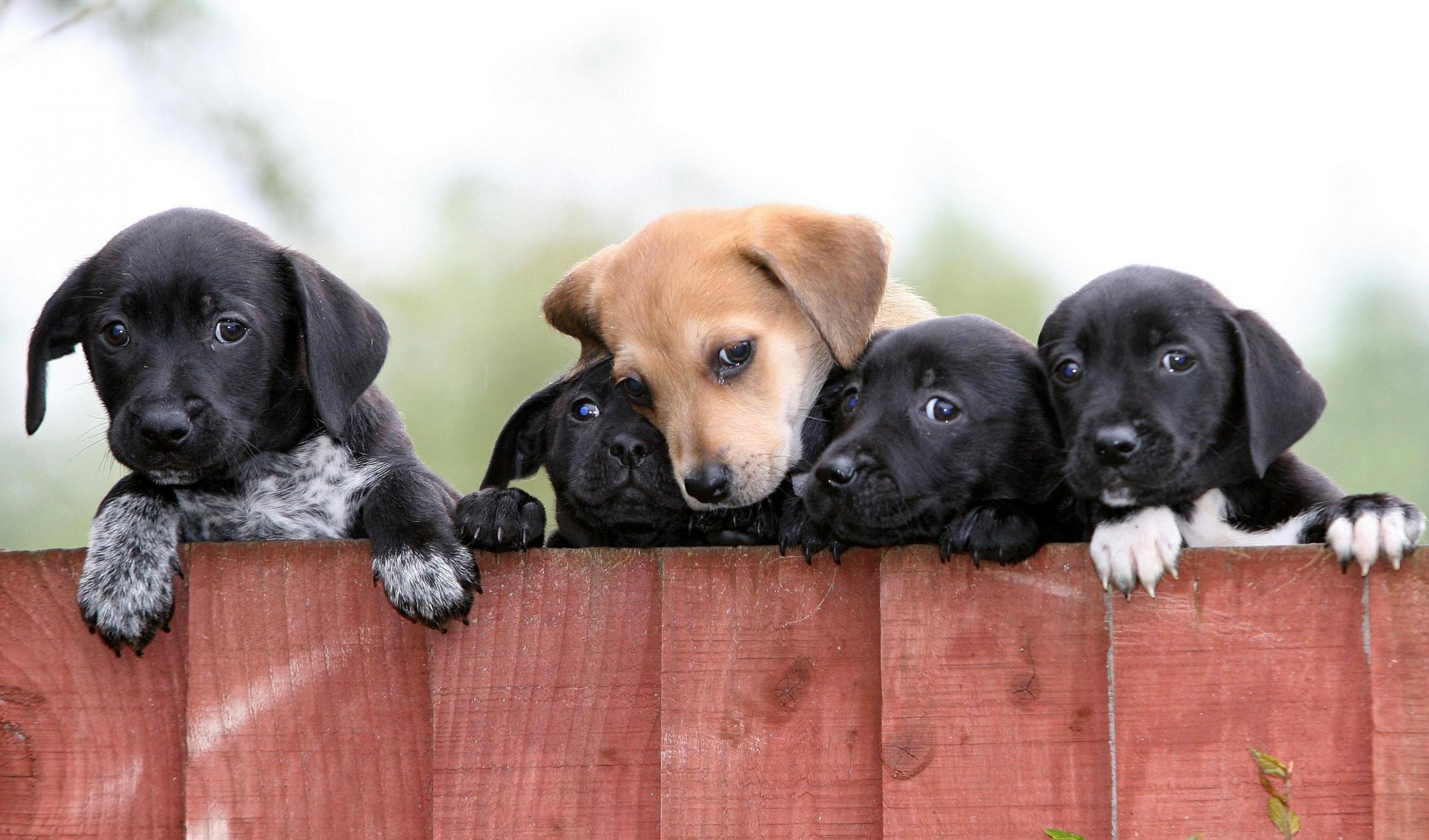 A call has gone out for tighter controls onn the selling of dogs and puppies. PICTURE: Martin Rickett/PA Wire