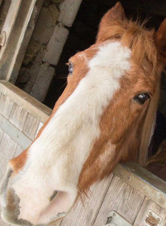 Manorbier area horse 'tagging' warning