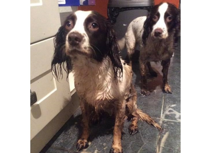 Dogs were left covered in oil following oil pollution at a Pembroke Dock beach.